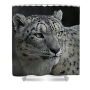 Snow Leopard 15 Shower Curtain