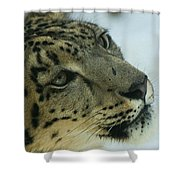 Snow Leopard 2 Shower Curtain