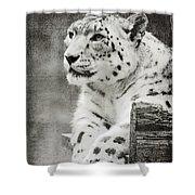 Snow Leopard 2 Shower Curtain