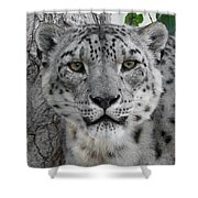 Snow Leopard 5 Shower Curtain