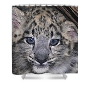 Snow Leopard Cub Endangered Shower Curtain
