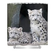 Snow Leopard Cubs Photograph By Chris Boulton