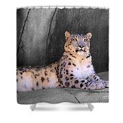 Snow Leopard II Shower Curtain