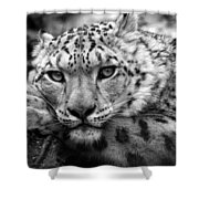 Snow Leopard In Black And White Shower Curtain