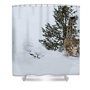 Snow Leopard Periscope Shower Curtain