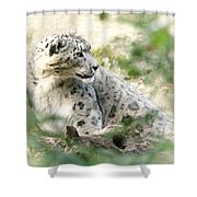 Snow Leopard Pose Shower Curtain