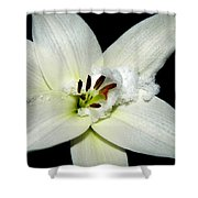 Snow Lilly Shower Curtain