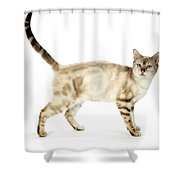 Snow Marble Bengal Cat Shower Curtain