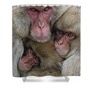Snow Monkey And Young Shower Curtain
