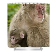 Snow Monkeys, Mother With Her Baby Shower Curtain