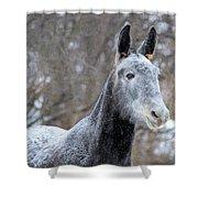 Snow Mule Shower Curtain