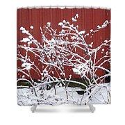 Snow On Burdock Burr Weed Against Red Barn Siding Shower Curtain