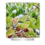 Snow On Green Leaves With Red Berries Shower Curtain