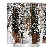 Snow On Tress 2 Shower Curtain