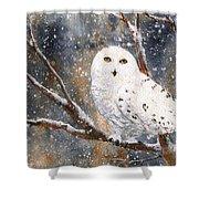 Snow Owl - Canada Shower Curtain