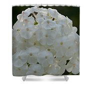 Snow Phlox Shower Curtain