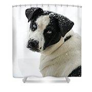 Snow Puppy Shower Curtain