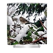 Snow Scene Of Little Bird Perched Shower Curtain