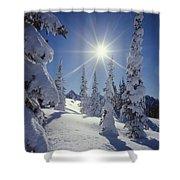 1m4882-snow Laden Tree Sunburst Shower Curtain