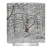 Snow White Forest Shower Curtain