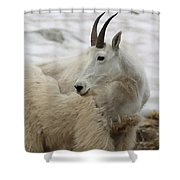 Snow White Mountain Goat Shower Curtain