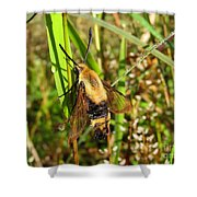 Snowberry Clearwing Shower Curtain