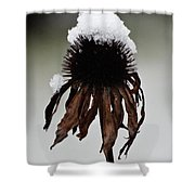 Snowcapped Coneflower Shower Curtain