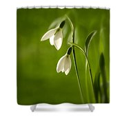 Snowdrop Shower Curtain