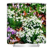 Snowdrops And Crocuses Shower Curtain