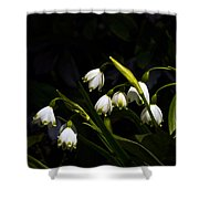 Snowdrops And Dark Background Shower Curtain