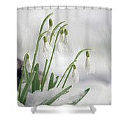 Snowdrops On Ice Shower Curtain