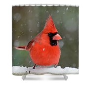 Snowflake Cardinal Shower Curtain
