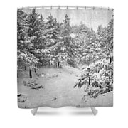 Snowing At The Forest Shower Curtain