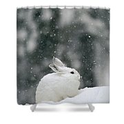 Snowshoe Hare In Snowfall Yellowstone Shower Curtain