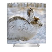 Snowshoe Hare In Winter Shower Curtain