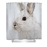 Snowshoe Hare Pictures 128 Shower Curtain