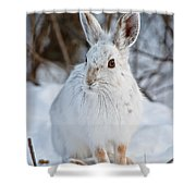 Snowshoe Hare Pictures 130 Shower Curtain