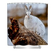 Snowshoe Hare Pictures 131 Shower Curtain
