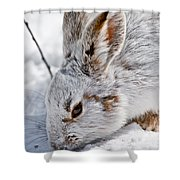 Snowshoe Hare Pictures 133 Shower Curtain