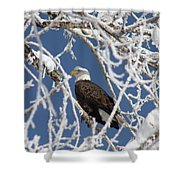 Snowy Bald Eagle Shower Curtain