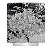 Snowy Branches In Darkness Shower Curtain