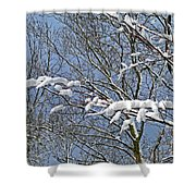 Snowy Branches With Blue Sky Shower Curtain