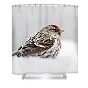 Snowy Common Redpoll Shower Curtain