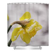 Snowy Daffodil Shower Curtain