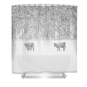 Snowy Day Highland Cattle Shower Curtain