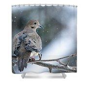 Snowy Dove Shower Curtain