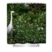 Snowy Egret 3 Shower Curtain