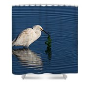 Snowy Egret Catches Sushi And Seaweed Shower Curtain