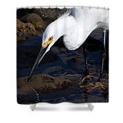 Snowy Egret Dribble Shower Curtain