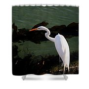 Great Egret Monterey Bay California  By Pat Hathaway Shower Curtain